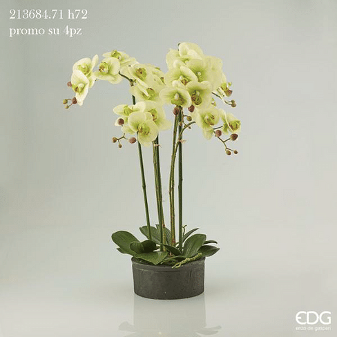 Орхидея EDG Enzo De Gasperi Арт.213684,71