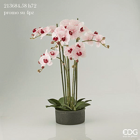 Орхидея EDG Enzo De Gasperi Арт.213684,58
