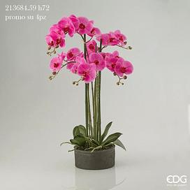Орхидея EDG Enzo De Gasperi Арт.213684,59
