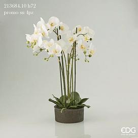 Орхидея EDG Enzo De Gasperi Арт.213684,10