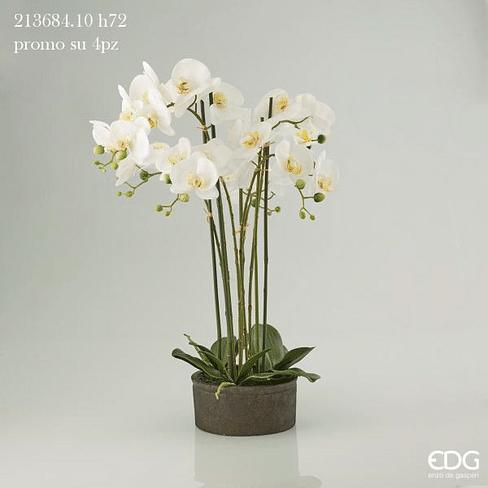 Орхидея EDG Enzo De Gasperi Арт.213684,1