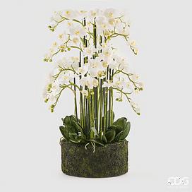 Орхидея EDG Enzo De Gasperi Арт.214855,10