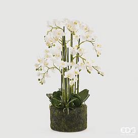 Орхидея EDG Enzo De Gasperi Арт.214854,10