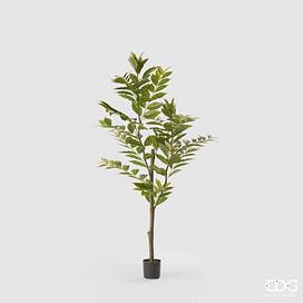 Кофейное дерево EDG Enzo De Gasperi Арт.232533,7