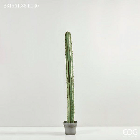 Кактус коллонновидный EDG Enzo De Gasperi Арт.231561,88