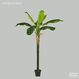 Банановая пальма EDG Enzo De Gasperi Арт.231390,7