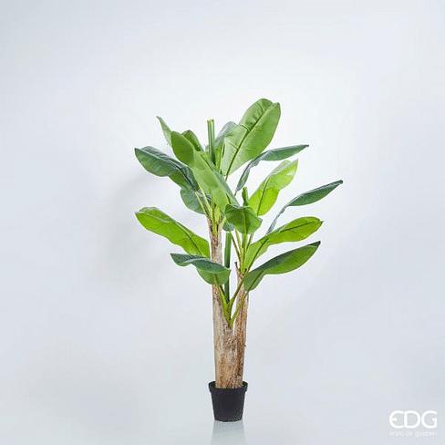 Банановая пальма EDG Enzo De Gasperi Арт.231863,70