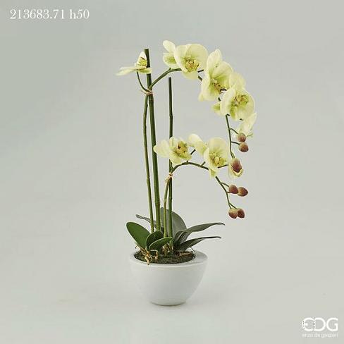 Орхидея в горшке EDG Enzo De Gasperi Арт.213683,71