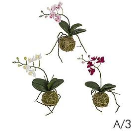 Орхидея подвесная SIA Арт.030224