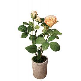 Куст розы в горшке SIA Арт.050335