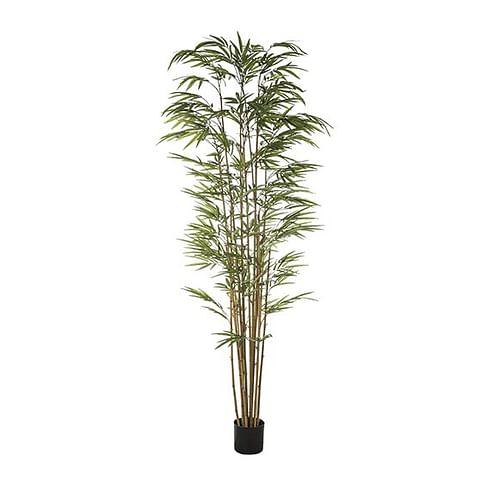 Бамбук в горшке SIA Арт.962759
