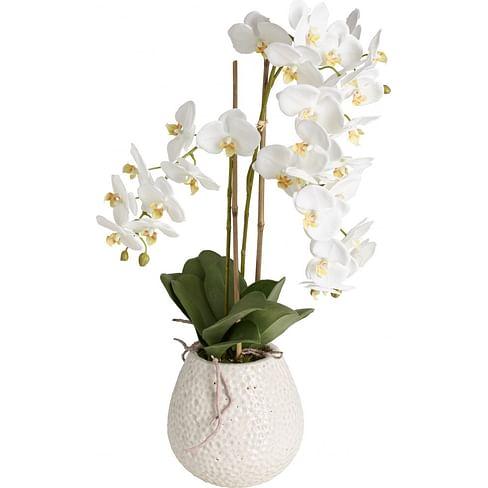 Орхидея Сиена в горшке SIA Арт.SIA-5099