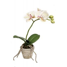 Орхидея в горшку SIA Арт.050344