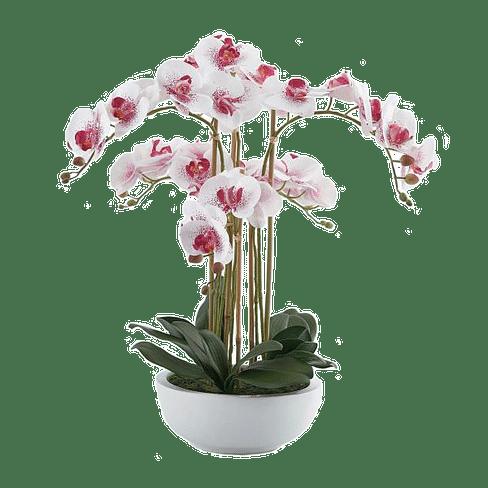 Орхидея в горшке EDG Enzo De Gasperi Арт.214292,58