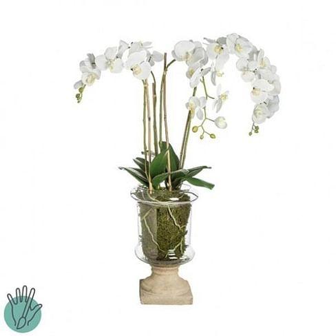 Орхидея в горшке SIA Арт.050292