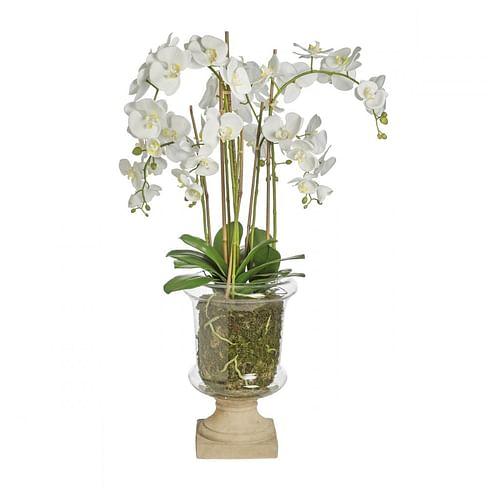 Орхидея в горшке SIA Арт.050291