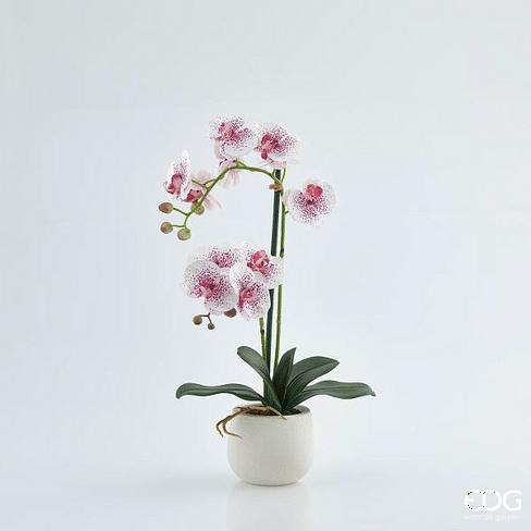 Орхидея в горшке EDG Enzo De Gasperi Арт.214735,58