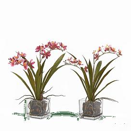 Орхидея EDG Enzo De Gasperi Арт.215287,55