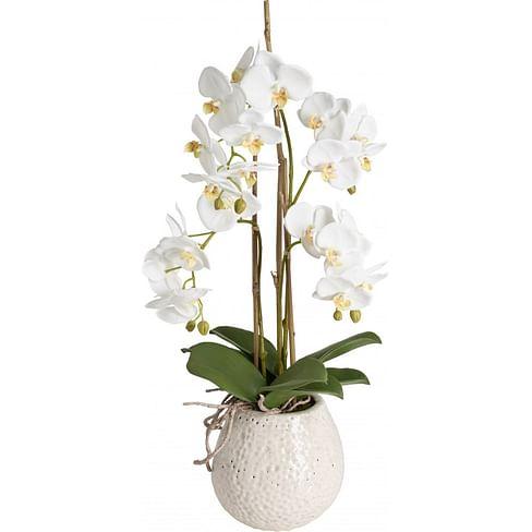 Орхидея в горшке SIA Арт.SIA-5094