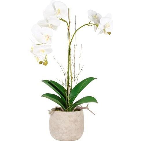 Орхидея в горшке SIA Арт.SIA-4769