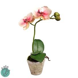 Орхидея в горшке SIA Арт.050345