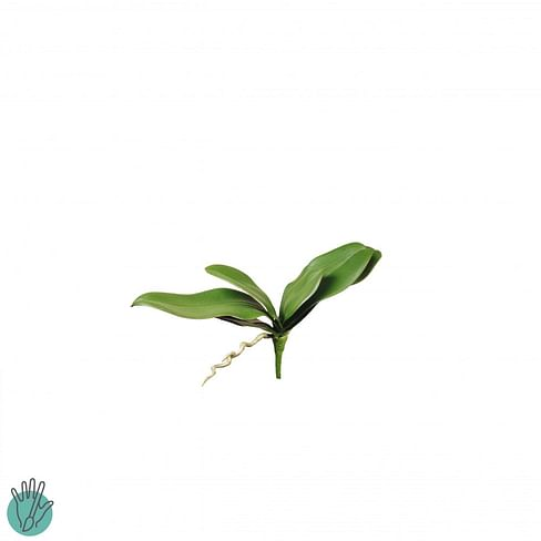 Листья орхидеи SIA Арт.190341