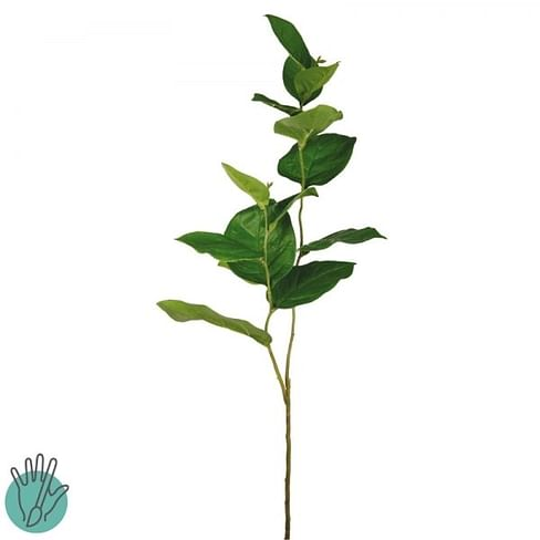 Зелень SIA Арт.012146