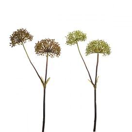 Семена эвкалипта SIA Арт.011877