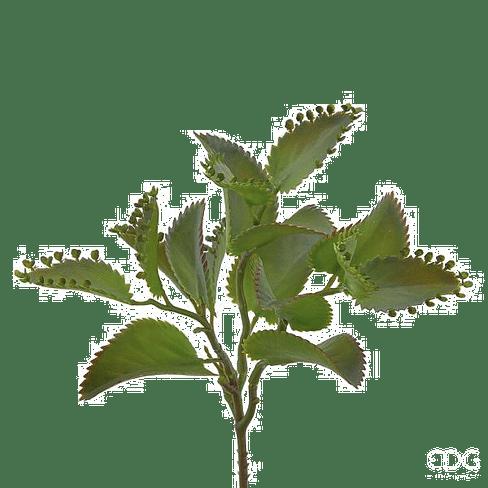 Венерина мухоловка (Дионея) EDG Enzo De Gasperi Арт.232227,71