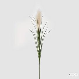 Пампасная трава EDG Enzo De Gasperi Арт.232595,14