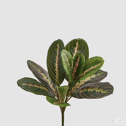Маранта листья EDG Enzo De Gasperi Арт.232736,75
