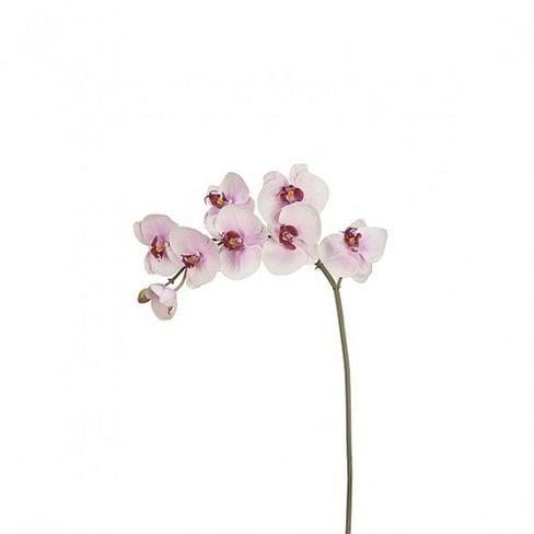Орхидея SIA Арт.010545