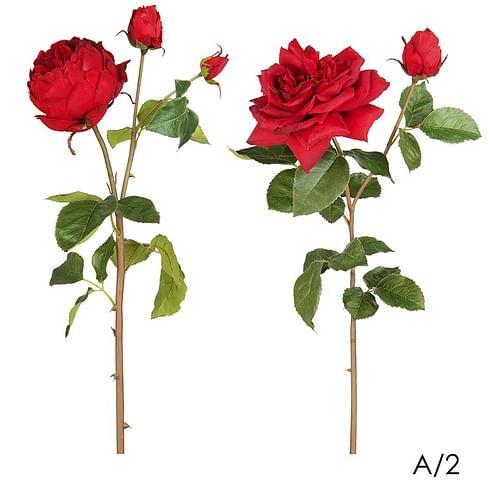 Роза Дэвид Остин SIA Арт.011166