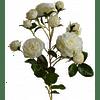 Роза Чайная SIA Арт.SIA-4125