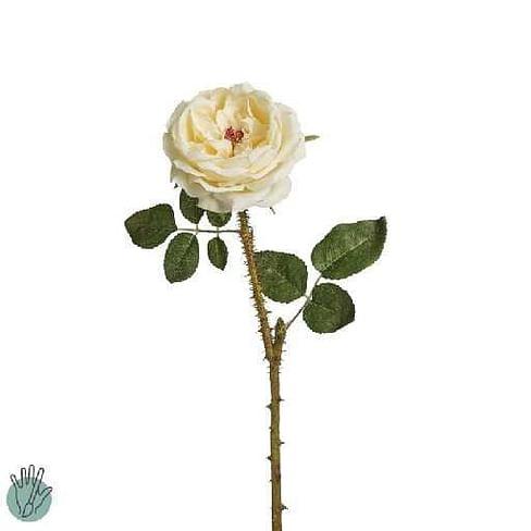 Роза Жоана SIA Арт.011559