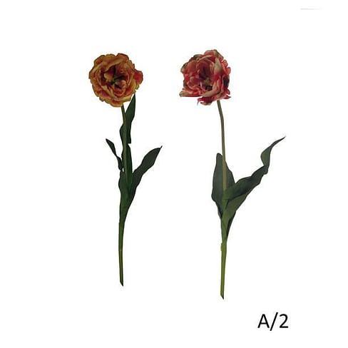 Тюльпан Дабл SIA Арт.011528