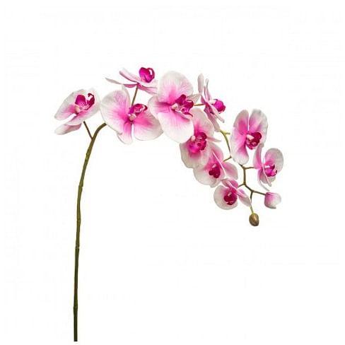 Орхидея SIA Арт.011936