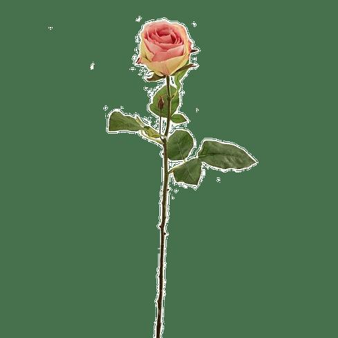 Роза EDG Enzo De Gasperi Арт.214246,75