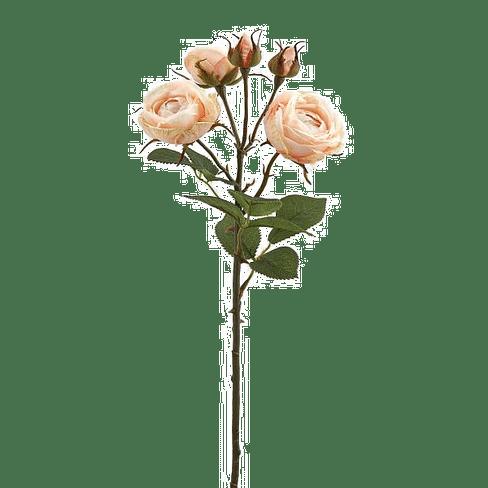 Роза EDG Enzo De Gasperi Арт.214786,33