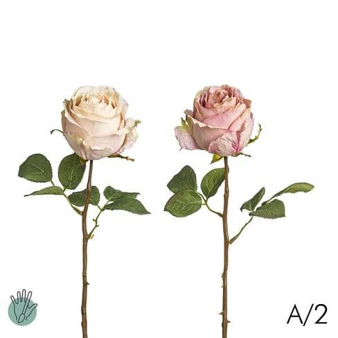 Роза Кейт SIA Арт.011884