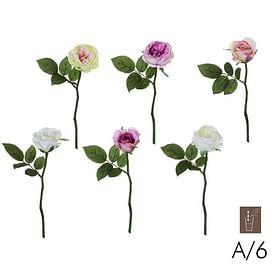 Роза Мария SIA Арт.010225