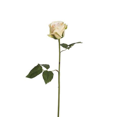 Роза Диана SIA Арт.011715