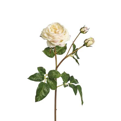 Роза Агат SIA Арт.011641