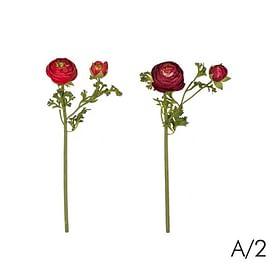 Ранункулюс (Лютик) SIA Арт.010881