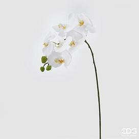 Орхидея EDG Enzo De Gasperi Арт.214467,10