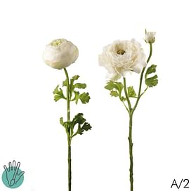 Ранункулюс Нора (Лютик) SIA Арт.012423