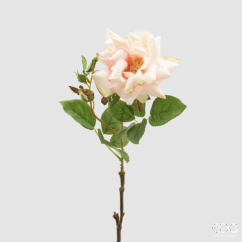 Роза Лиза EDG Enzo De Gasperi Арт.215337,54
