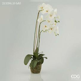 Орхидея EDG Enzo De Gasperi Арт.213396,10