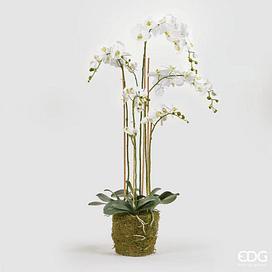 Орхидея EDG Enzo De Gasperi Арт.212023,10