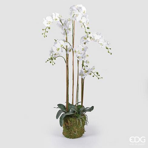 Орхидея EDG Enzo De Gasperi Арт.212075,10